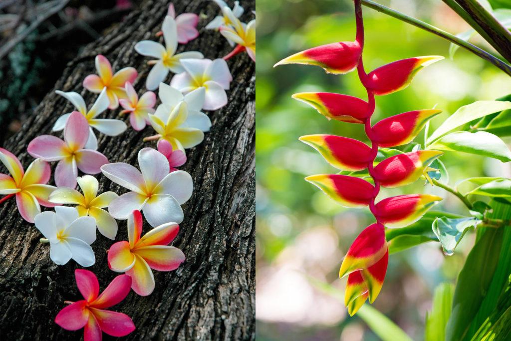 左:プルメリア、右:ヘリコニア