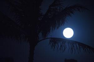 ハワイの満月とヤシの木