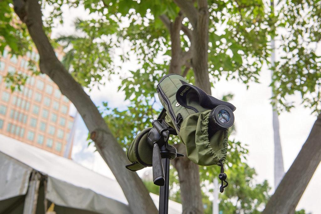 木の上のマヌオクー(シロアジサシ)を観察できる望遠鏡