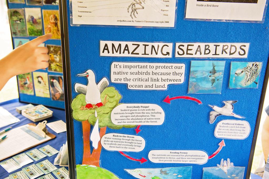 海鳥について学習できるブース