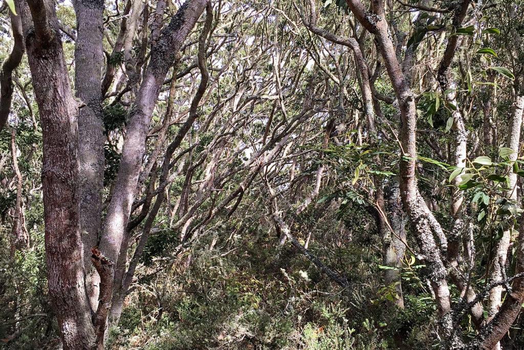 コアの森のキープカ